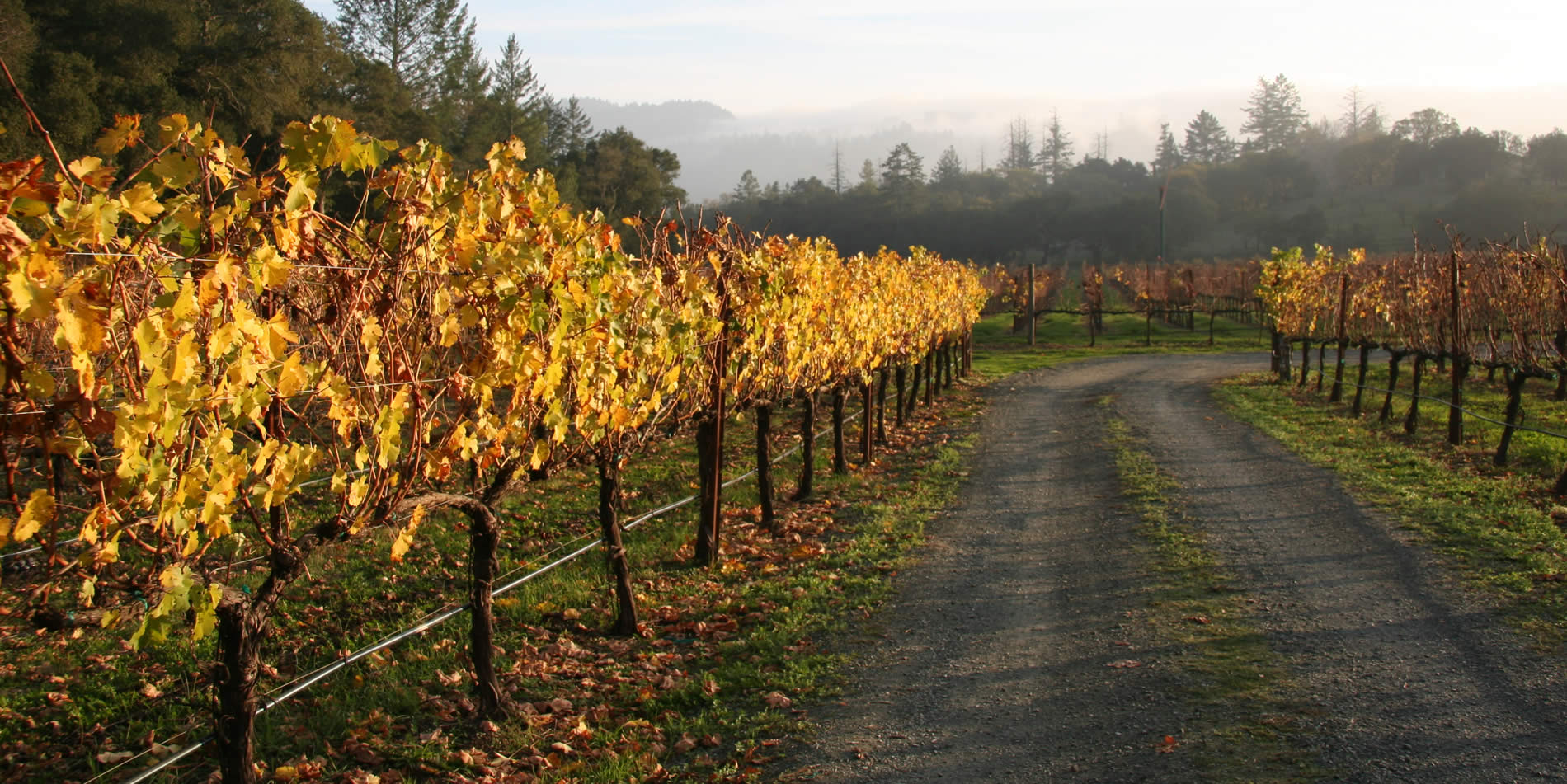 napa valley wine makers and wine sales