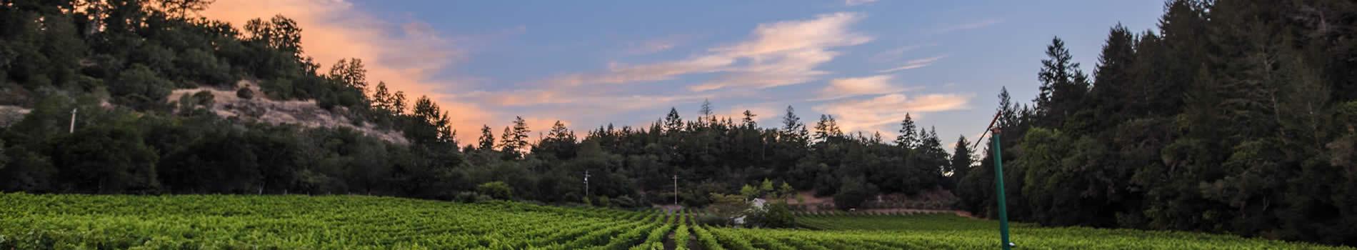 purchase chelsea vineyards wine napa valley ca